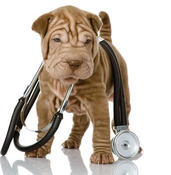 собака и фонендоскоп