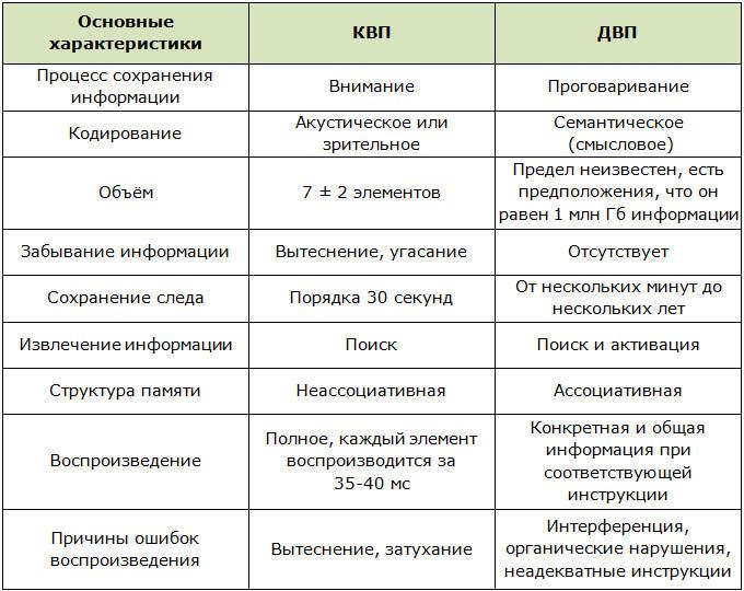 Сравнение долговременной и кратковременной памяти человека