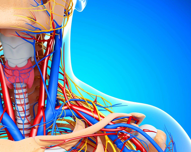 Атеросклероз кровеносных сосудов шейного отдела может иметь генетическое происхождение,