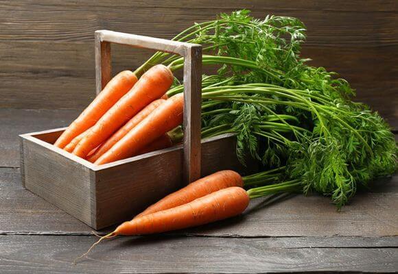 Морковь от варикозного заболевания