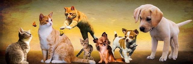 собаки, кошки, играть, животные