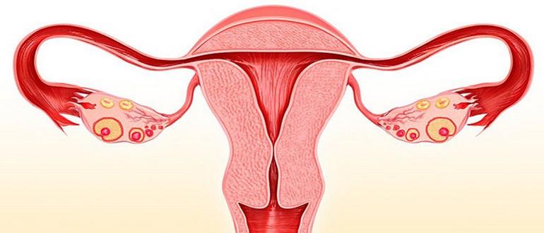 Развеиваем мифы: можно ли забеременеть при эрозии шейки матки