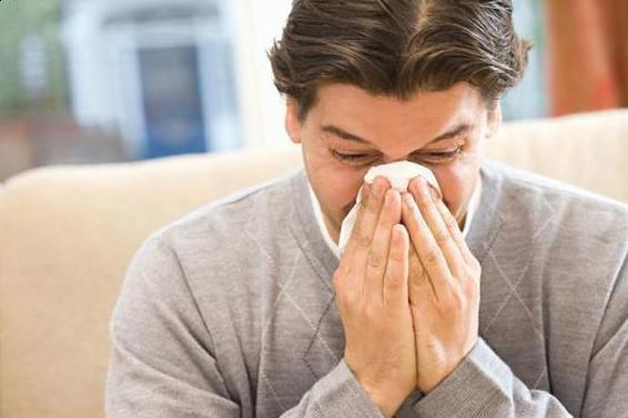 чихает от аллергии