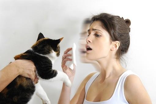 аллергия на белок кошки