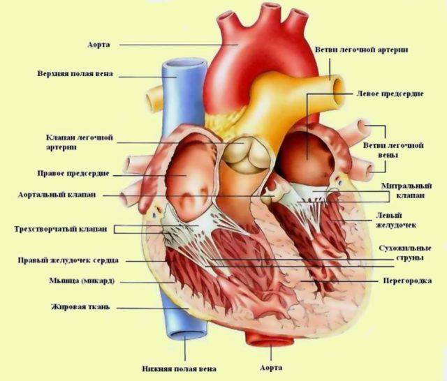 Общее состояние больных может быть удовлетворительным, средней тяжести или тяжелым
