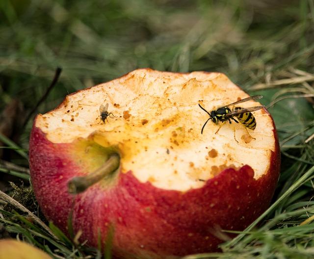 насекомое сидит на яблоке