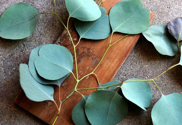 Листья эвкалипта на разделочной доске