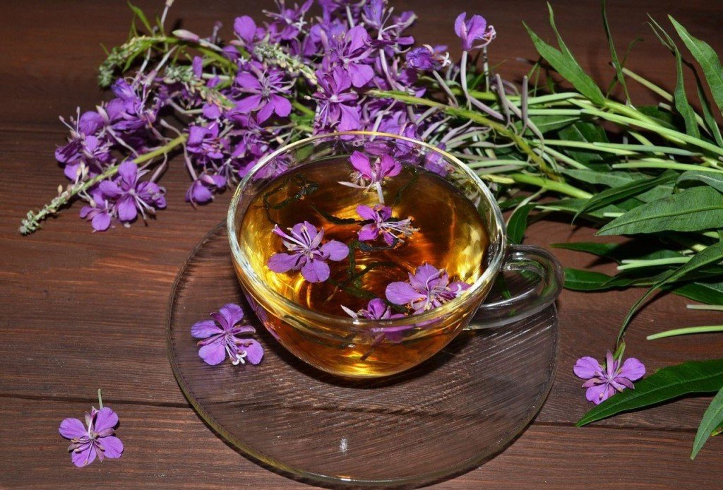 Кипрей – лекарственное растение, обладающее многочисленными положительными качествами