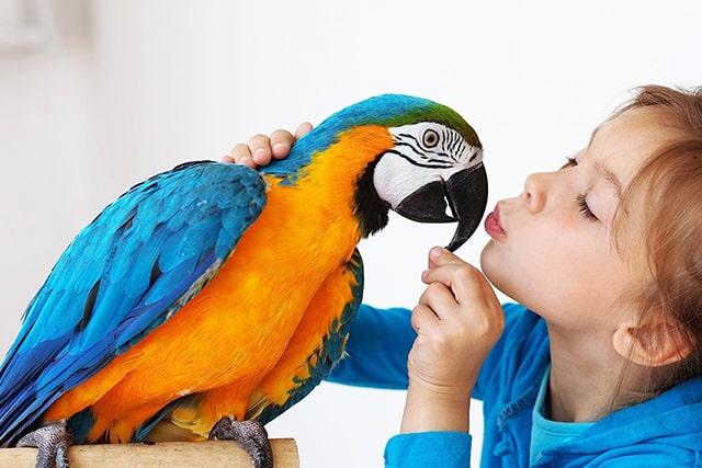 девочка и большой попугай