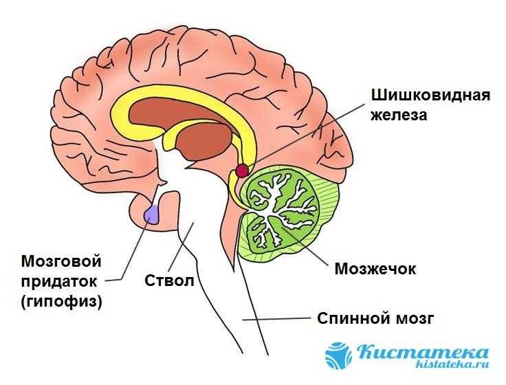 Изменяется отток гормонов, отвечающи за цикличность сна и бодрствования, половое созревание