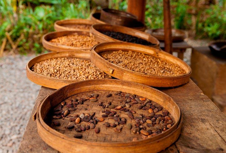 какао-плантация