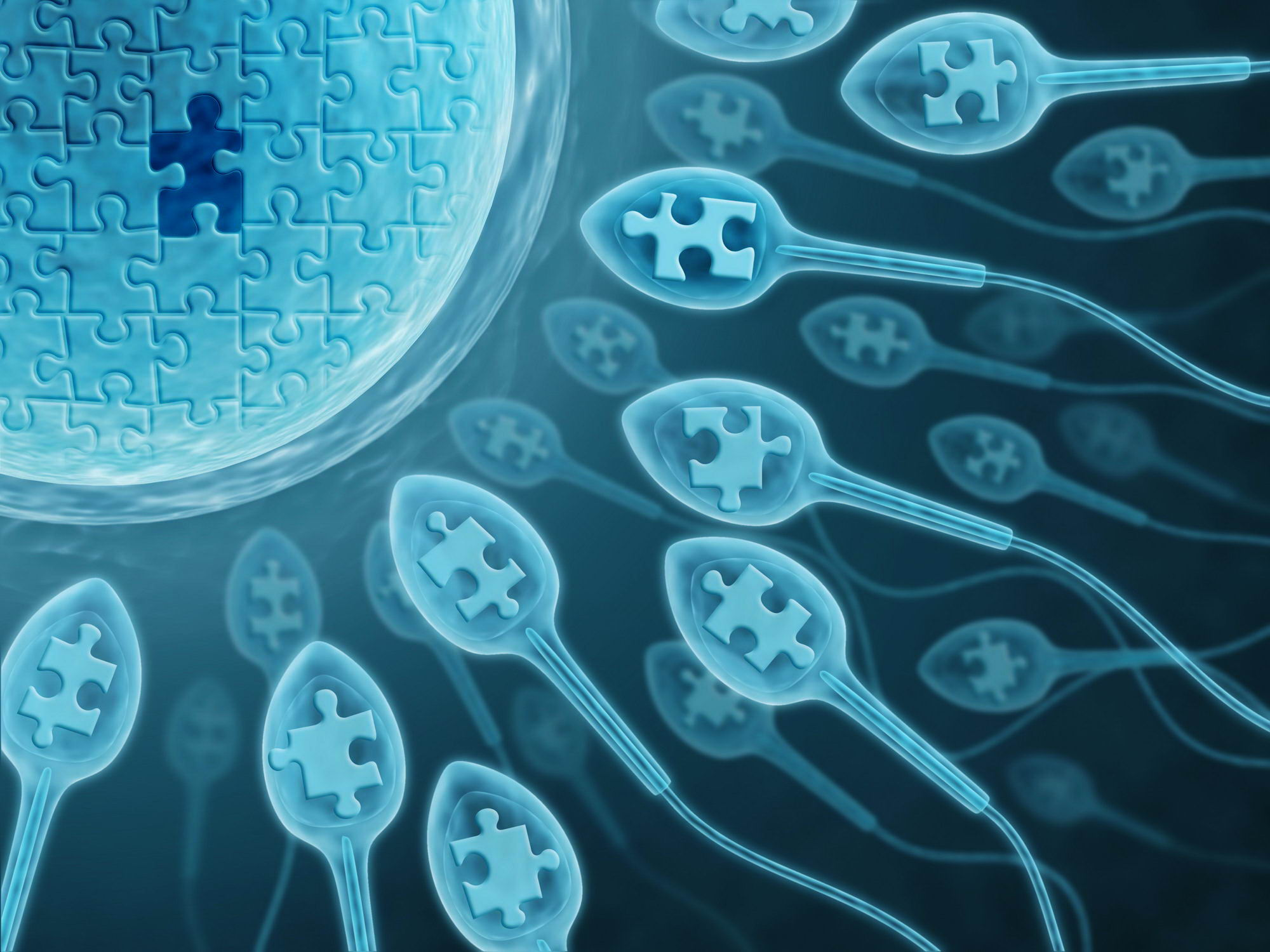 сперматозоиды пазл